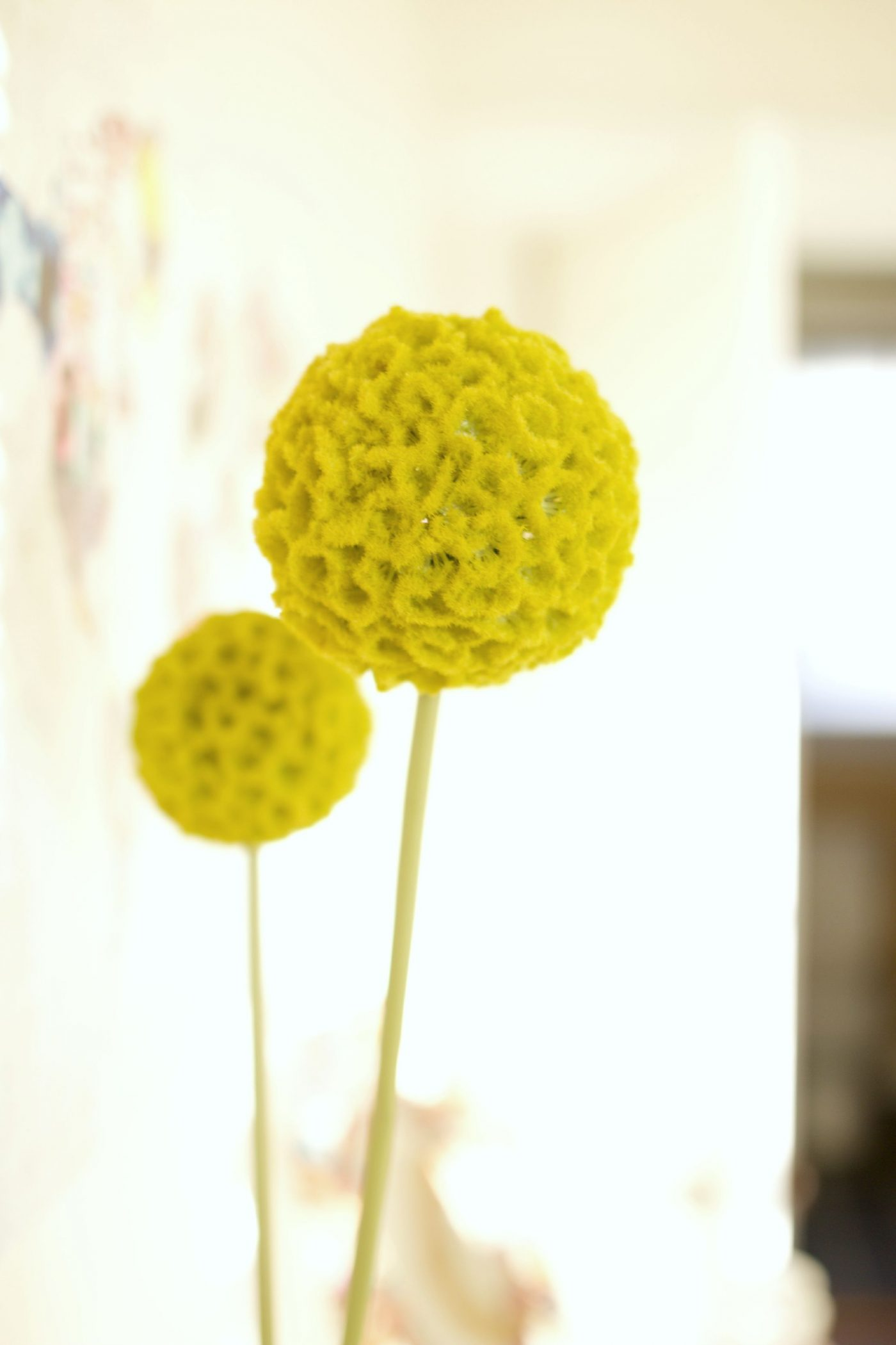 CB2 Gren Allium