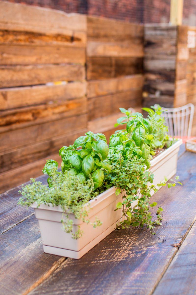 Herbs being grown at Comfort Station in Cincinnati