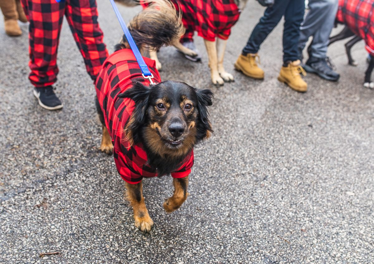 Mt. Adams Reindog Parade Cincinnati Holiday Events, Red Whale Rentals Cincinnati